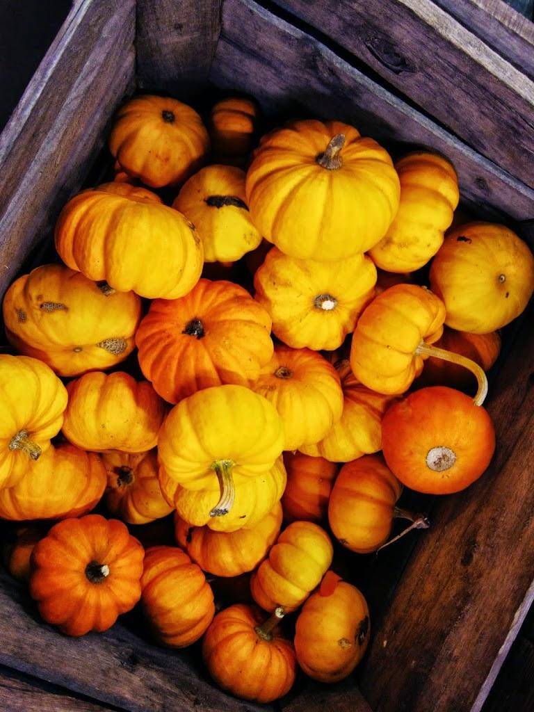 Raw Savory Thanksgiving Recipes